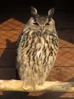 One of our owls